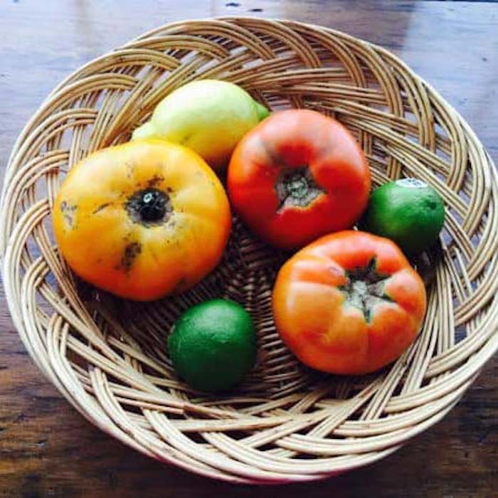 Look at these amazing home-grown tomatoes, shown with a couple limes and a lemon. We don't refrigerate our tomatoes. They taste so much better at room temperature.