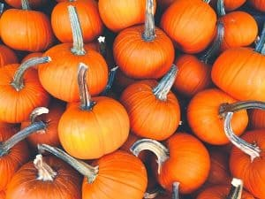 Pumpkins can be used for more than jack-o-lanterns! Check out our recipes. Photo by Corey Blaz, fancycrave.com.