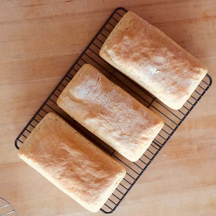 The Best Basic White Bread from a Sponge recipe makes 3 standard loaves.